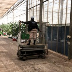 Inside the Dube Agrizone. Hydroponic cucumber cultivation.